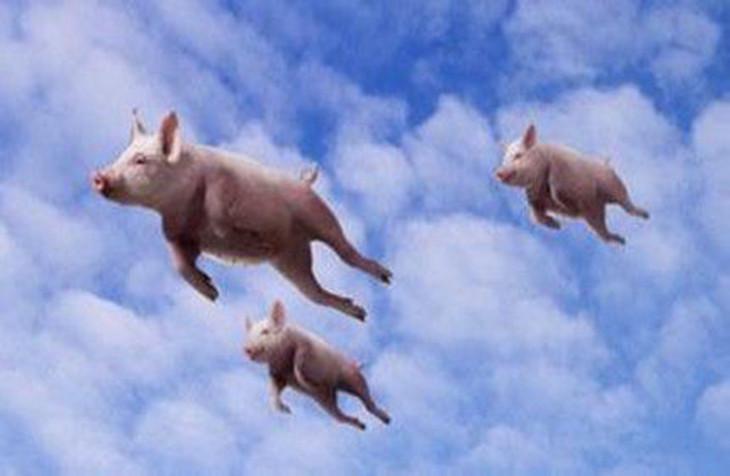 激励,它还是上不了树。这个世界上只有一只猪做到了,那就是猪八戒,但是别忘了猪八戒的基因,他骨子里不是猪,他是神仙,是玉皇大帝的天蓬元帅。   我不否认梦想还是要有的,万一实现了呢!这句话。但作为传统中小企业,本身的特性决定了很多不可或缺的核心生存要件,比如产品,比如服务,我们还是要脚踏实地,万万不可拿理想当现实,现实是什么?现实就是,万分之一的梦想成为现实,万分之九千九百九十九的梦想可能无法实现,依旧是梦想。   针对未来两三年的企业经营管理,作为老板,应该怎样面对和冷静思考一些热点和问题,对企业的发展