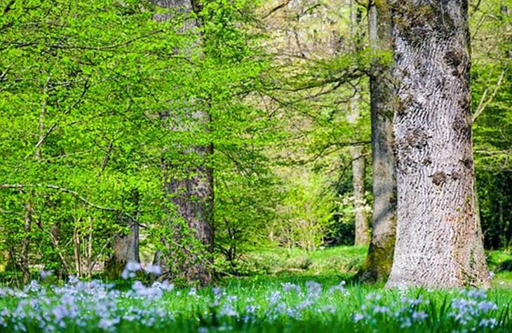 树有大树,小树,树苗,苍劲,挺拔,参天大树之称.